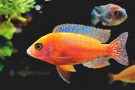 La lista definitiva de lo que no puede faltar en tu acuario