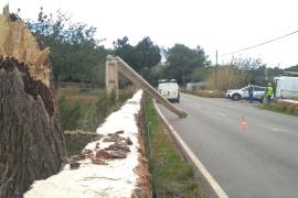 El fuerte viento de 'Hortense' arranca árboles por toda la isla