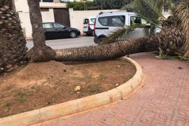 'Hortense' deja hasta el momento siete incidencias en Ibiza y Formentera