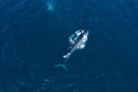 Héroes, incívicos y ballenas en Ibiza