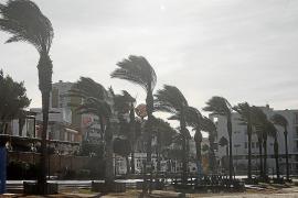 Emergencias atiende 22 incidencias en las Pitiusas provocadas por el fuerte viento