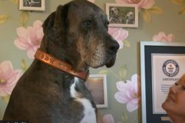 Muere Freddy, el perro más grande del mundo