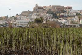 La Alianza por el Agua reitera la necesidad de conservación de los humedales en las Pitiusas
