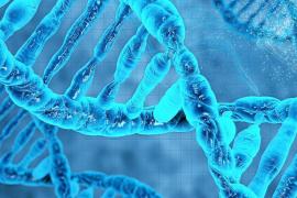 La UIB investiga el origen de la leucemia linfocítica