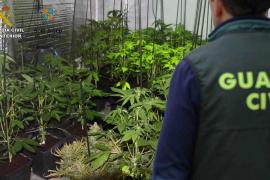 Detenido el dueño de un laboratorio de marihuana desmantelado en Sant Josep
