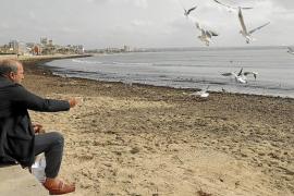 Las concesionarias de las playas aún esperan una respuesta de Cort