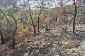 Sant Antoni contrata la redacción de un Plan Local de Emergencias ante Incendios Forestales