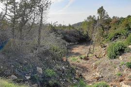 El torrente d'en Ribes deja de ser un polvorín más de un año después