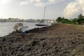 La fuerza del viento vara dos barcos que estaban fondeados en Talamanca