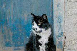 Sant Josep matiza que la caza de gatos no será inmediata