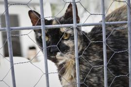 Pacma pide la paralización inmediata del contrato en Sant Josep sobre la captura de gatos