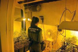 Dos detenidos en Santa Eulària por una plantación de marihuana en su vivienda