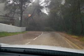 La carretera de La Joya, bloqueada por la caída de un árbol