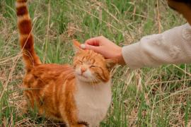 ¿Son desleales los gatos? Esto dice un experimento reciente