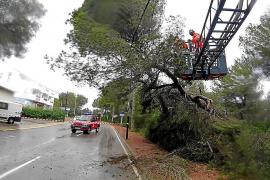 Los bomberos se tuvieron que emplear a fondo para retirar árboles de gran tamaño que cayeron sobre las carreteras