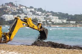 Comienzan los trabajos de cribado de arena y limpieza de posidónia en Talamanca