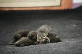 Acusan a los ayuntamientos de Baleares de «querer acabar» con los gatos de las colonias felinas