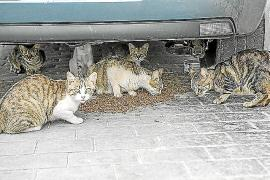 Los amigos de los gatos callejeros declaran la 'guerra' al Ajuntament de Bunyola