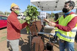 Sant Antoni ha recogido cerca de 150 toneladas de residuos orgánicos desde noviembre