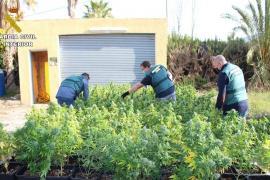 Detenido por ocupar una casa y adaptarla al completo para producir mil plantas de 'maría'