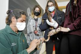 Aprendiendo en el instituto a luchar contra las serpientes de Ibiza