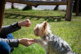 ¿Quién se queda con el perro? El Congreso aprueba la custodia compartida