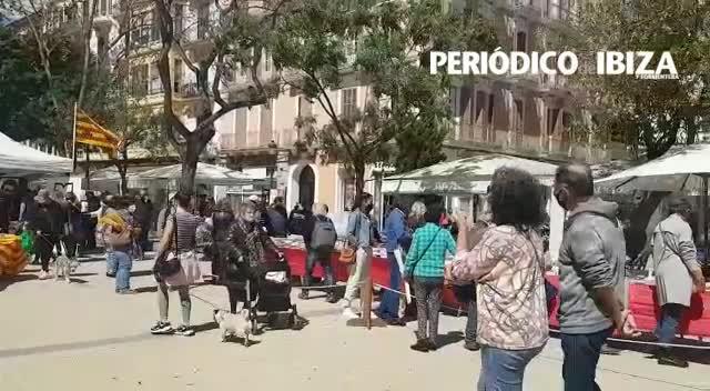 Arranca un esperado y soleado Sant Jordi en Vara de Rey