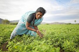Las mujeres de Anantapur y su esfuerzo por cambiar la sociedad india llegan a Eivissa