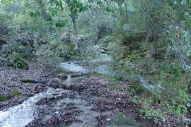 Un bosque encantado ... NOOOOOO, ses fonts Ufanes