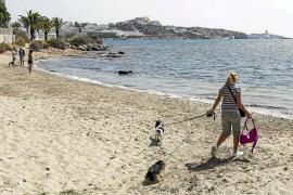 La Policía denuncia a propietarios de perros en Ibiza por llevarlos a la playa