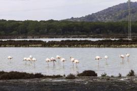 Mir afirma que su prioridad es dignificar espacios como el Parque Natural de Ses Salines