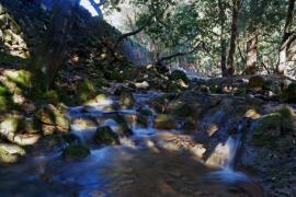 Bosque en Orient, Mallorca