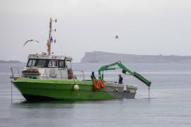 Sant Antoni retira 40 toneladas de 'muertos' ilegales en tres días y los trabajos continúan