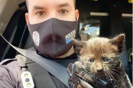 La Policía de Sant Josep busca un hogar para un gatito rescatado