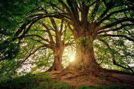Un joven positivo en Covid pasa 11 días en un árbol para no contagiar a su familia