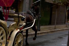 Coche de caballos en el centro de Palma