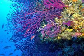 El mar Mediterráneo se calienta a un ritmo 20% más alto que la media mundial, según WWF