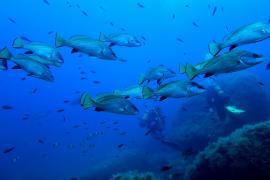 La Reserva Marina de Tagomago presenta un buen estado de conservación