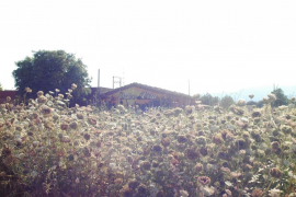 Flores en Valldemossa