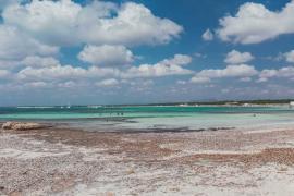 Baleària apuesta por la sostenibilidad en sus trayectos a Baleares