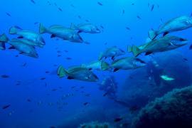 Amics de la Terra denuncia incumplimientos de los usuarios de motos acuáticas por zonas como Tagomago