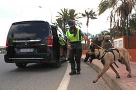 Consell y Guardia Civil denuncian a 31 vehículos por transporte ilegal