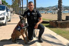 Los perros detectores de drogas vuelven con varias incautaciones en Sant Antoni