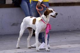 El Recinto Ferial acoge este sábado una jornada de adopción responsable de animales