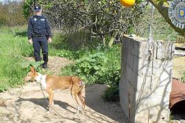 La Policía Local de Sant Antoni denuncia a un vecino por maltratar a podencos