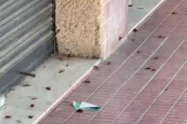 Alarma entre los vecinos de la zona del Conservatorio por una plaga de cucarachas