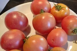 ¿Cuáles son los mejores tomates de Mallorca?