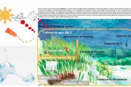Un proyecto de la UIB sobre posidonia gana el Save Posidonia Project