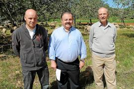 La producción de cordero ibicenco se estabiliza tras años de reducciones