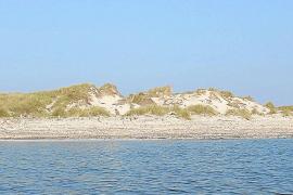 El Govern calcula que 6.000 barcos usarán las boyas ecológicas en las Pitiüses